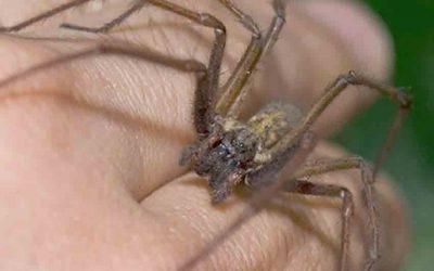 Spider Bites Identify
