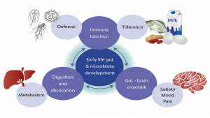 Role of Gut Microbiota
