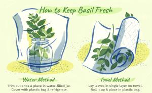 Basil leaves for prevention from flu